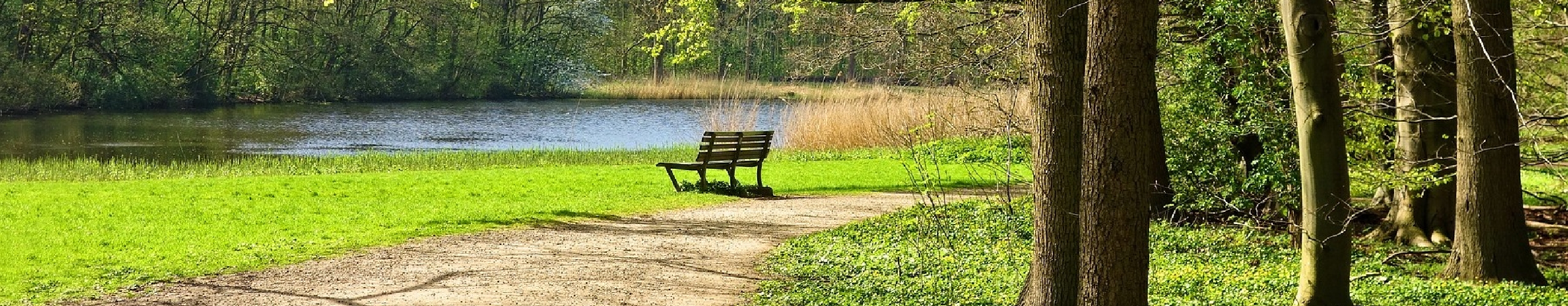 Woodland seat and lake panel background
